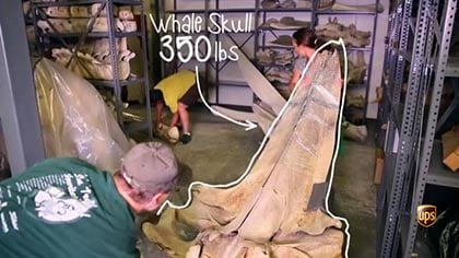 UPS helps this museum move one of the largest whale and elephant collections in history.