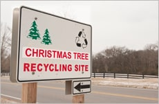 Recycle Your Tree